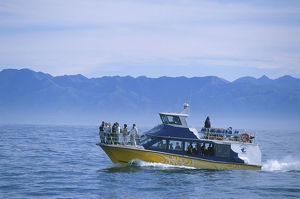 Eco-Tourism boat on the waters off the Kaikoura coast, looking for a pod of sperm whales