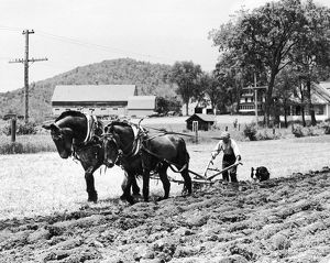 Farmer steering plow pulled by two horses