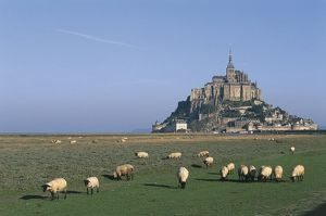 world heritage/building exterior/france normandy mont saint michel rams grazing