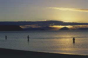 Trout fishing at sunset at the mouth of the Waitahanui River, North Island, New Zealand
