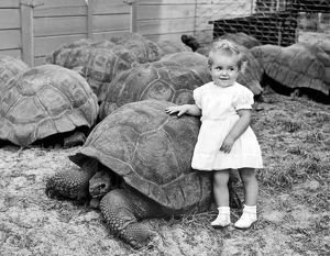 A Young Girl Leans On A Tortoise